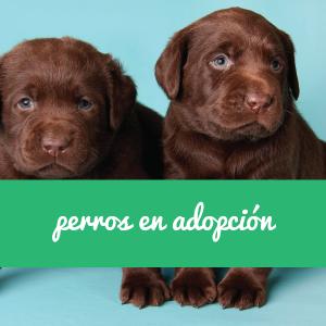 Perros en adopción en Sevilla