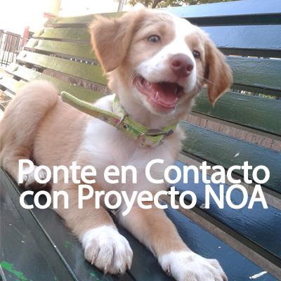Contacta con NOA