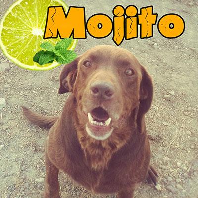 mojito5