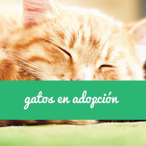 Gatos en adopción en Sevilla