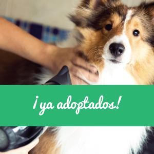 perros y gatos adoptados en Sevilla